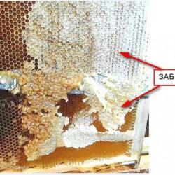 забрус мед