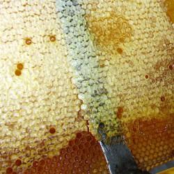 забрус пчелы