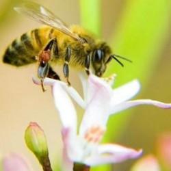 сколько стоит цветочный мед