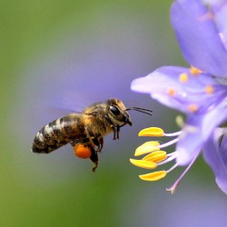 цветочный мед свойства