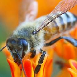 цветочный мед состав