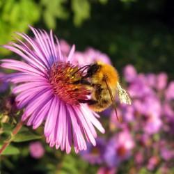 чем полезен цветочный мед