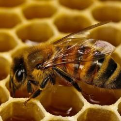 мед с прополисом польза