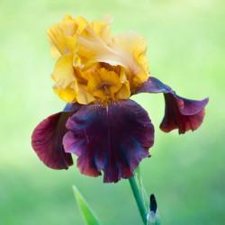липово-цветочный мед
