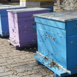 облет пчелы 9 марта 2016 год