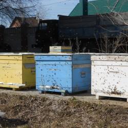 облёт пчелы 9 марта 2016 год