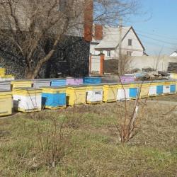 первый облет пчелы 9 марта 2016 год