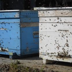 первый облёт пчелы 9 марта 2016 год